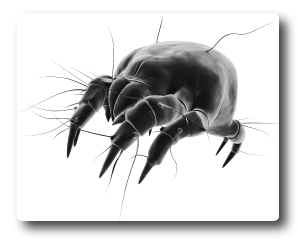 dust mite extermination services