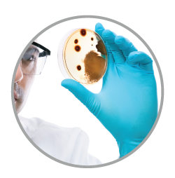 mold testing and remediation services