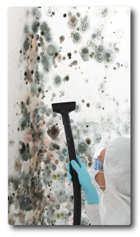 mold wall restoration service